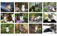 Året i trädgarden - kattkalender 2015