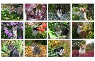 Bland blommor och blad - kattkalender 2015